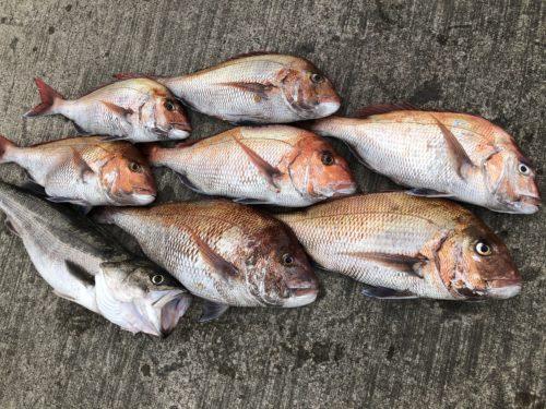 タイラバで釣れた魚たち