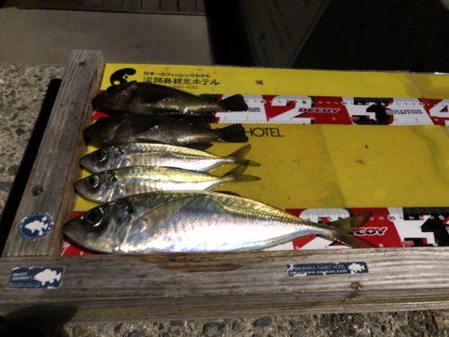 今晩の釣果